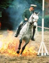Gelassenheitstraining -Feuer